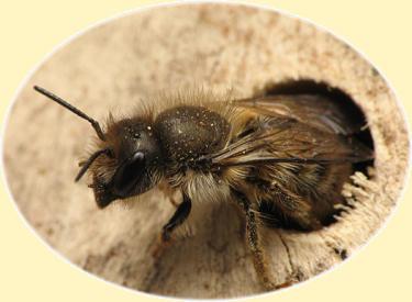A Mason Bee Home Will Enhance Garden Production